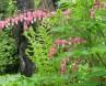 La Mara fleurs 1