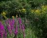 La Mara fleurs 3